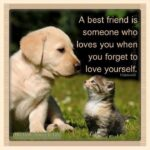 Animals Are Best Friends Quotes Twitter