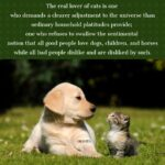 Cat And Dog Quotes Funny Tumblr