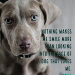 Cute Dog Quotes And Sayings Tumblr