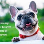 Funny Dog Images And Quotes Tumblr