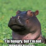 Funny Hippo Sayings Twitter