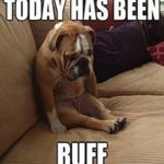 Puppy Captions Funny