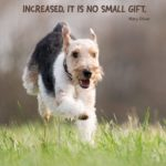 Inspirational Quotes With Animals Pinterest
