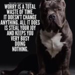 Pitbull Dog Quotes Positive Twitter