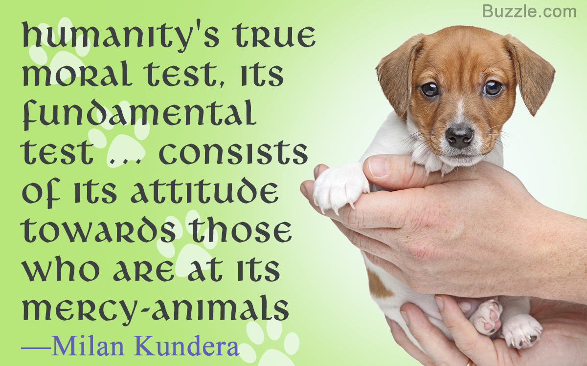 Quotes About Animal Abuse And Neglect Tumblr